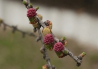 Фотографии растений
