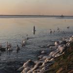 Балтика, снимок 16