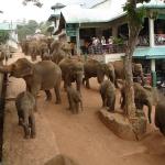 Купание слонов снимок 5.