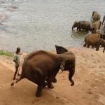 Купание слонов снимок 2.