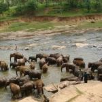 Купание слонов.