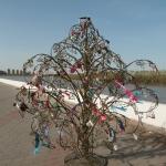 Дерево счастья, Иртышская Набережная недалеко от бульвара Победы.