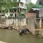 Купание слонов снимок 3.