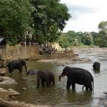 Купание слонов снимок 4.