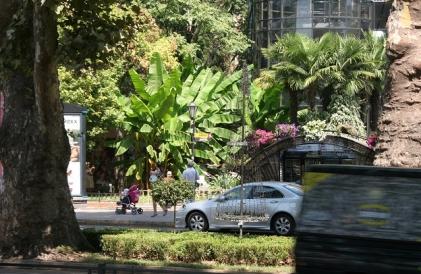 Как фотографировать в тропиках